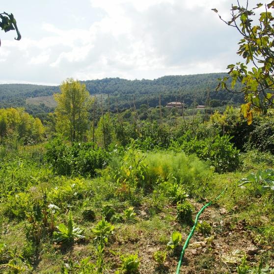 wpid-tuscan-garden.jpg.jpeg